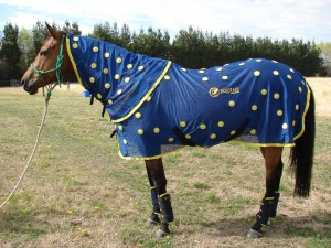 Remi wearing his equine magnetix rug