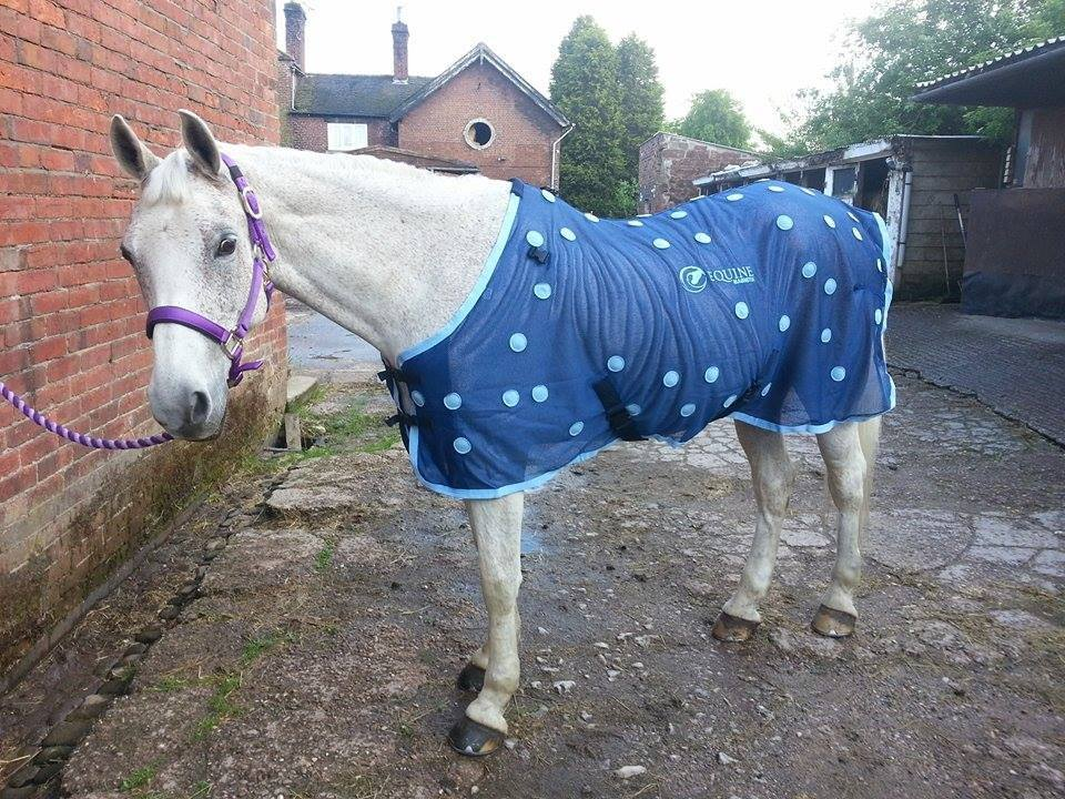 Inik wearing his Equine Magnetix rug