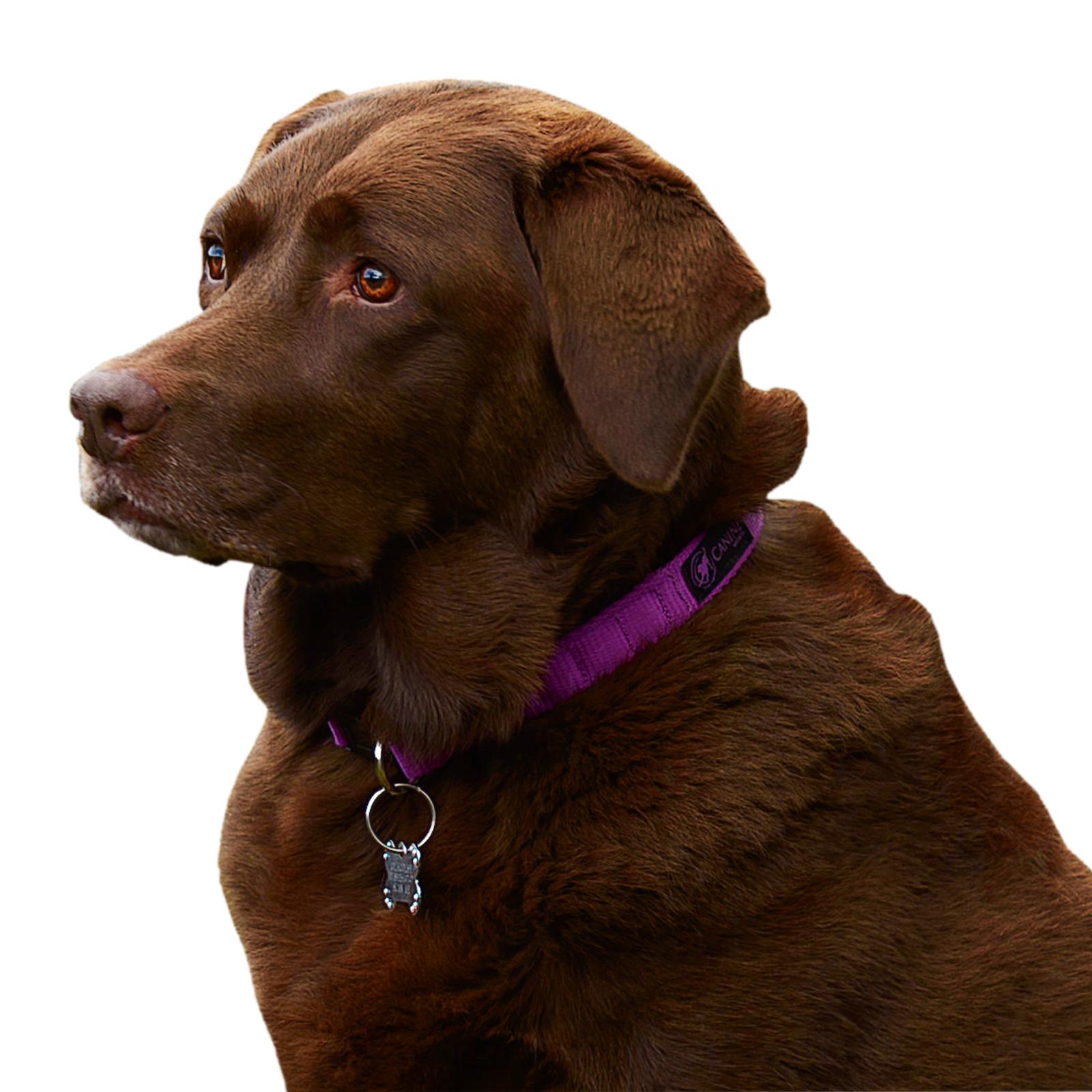 Magnetic Dog Collars