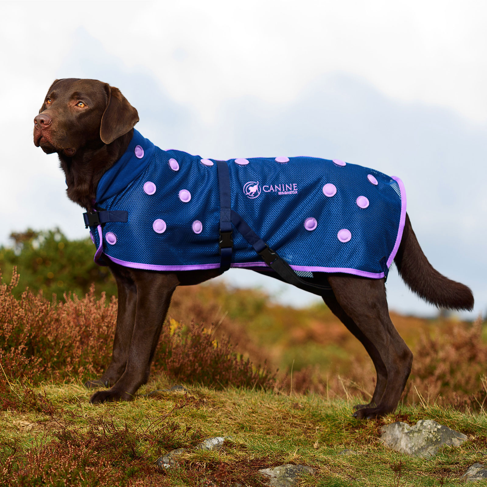 Magnetic Dog Coat with purple spots by Canine Magnetix