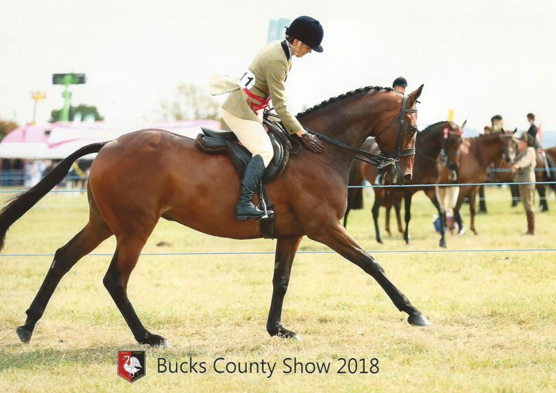Annacotty pictured after winning the retrained racehorse class at Bucks County Show 2018